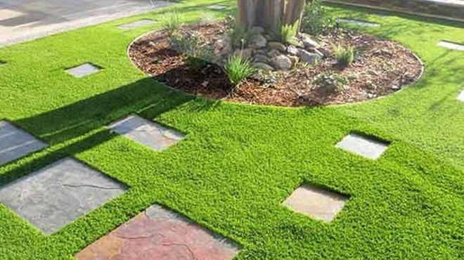 Sân vườn nên trồng những loại cỏ nào?